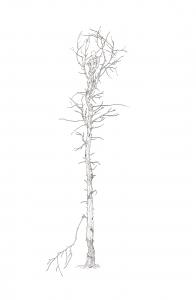 http://erikotsogo.com/files/gimgs/th-4_blooming-self-with-vital-depth_12638762454_o.jpg